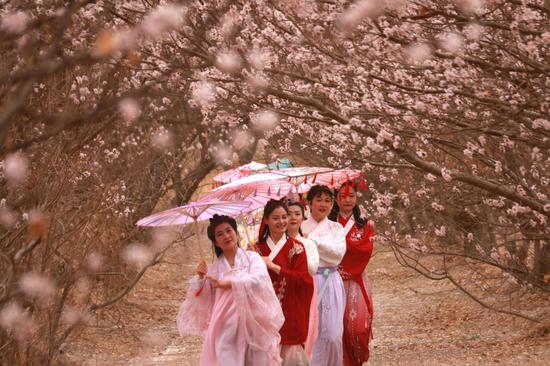 3月30日,在甘肃省敦煌市月牙泉镇月牙泉村的李广杏园中,汉服爱好者参加汉服走秀表演。