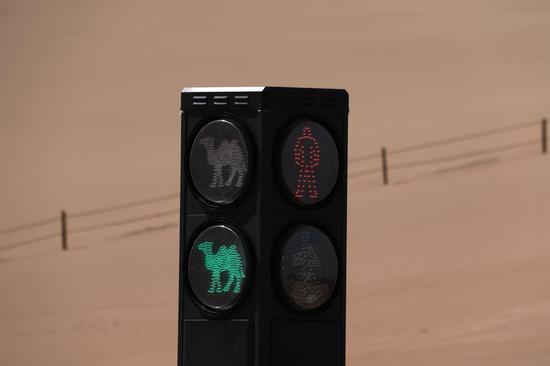 """敦煌鸣沙山月牙泉景区:""""红骆驼停,绿骆驼行"""""""
