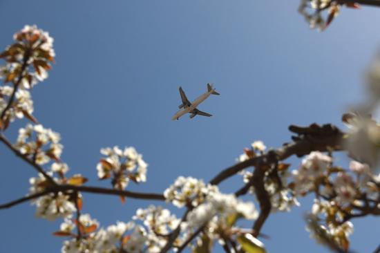 2021年4月17日,一架飞机从甘肃省敦煌市莫高镇泾桥村梨园上空飞过。