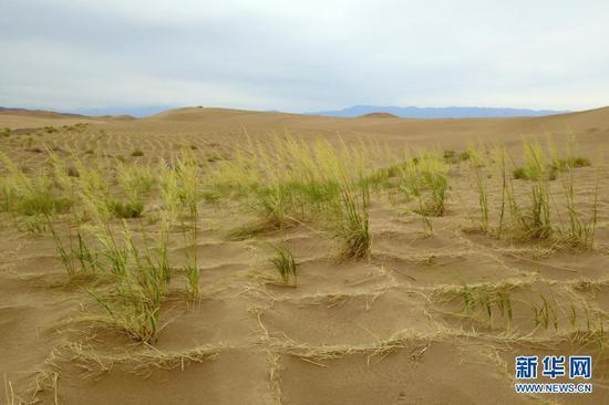 这是6月16日拍摄的临泽县北部干旱荒漠区(无人机照片)。新华社记者 范培珅 摄