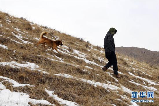 """1月15日,""""小黄""""跟随三岔资源管护站护林员张得团一起巡山。"""