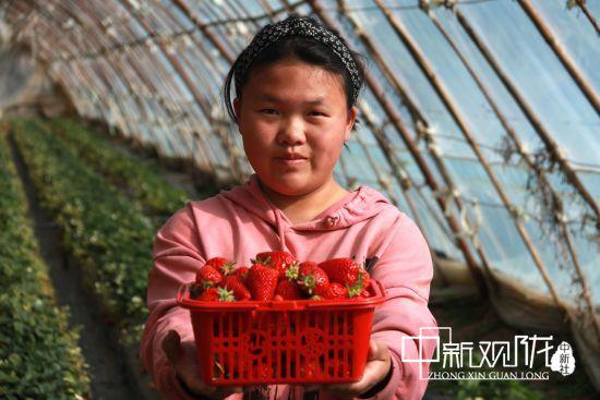 雨水时节,敦煌市的农民们抓紧农时,加强温室果蔬、花卉生产管理,一派繁忙景象。张晓亮 摄