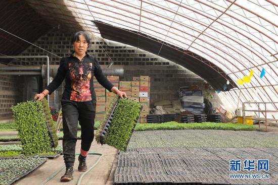 3月13日,村民在酒泉市肃州区银达镇六分村的一家合作社育苗大棚内忙碌。新华社记者 张智敏 摄