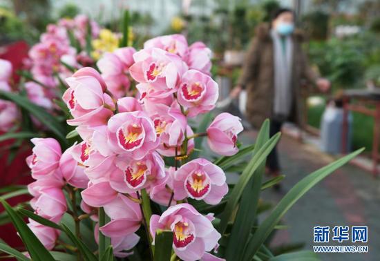 2月2日,顾客在甘肃省临夏县一花卉市场选购鲜花。新华社发(史有东 摄)