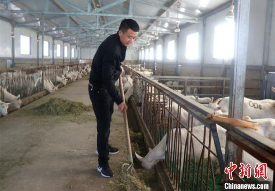 """甘肃庆阳市小伙嵇元拯回乡创业当""""羊倌"""",细心学习养殖技术"""