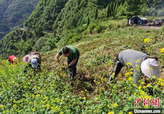 图为冯继(右二)和村民一起务农,了解村民实际困难。(资料图)受访者供图