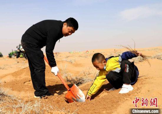 图为春耕时节,志愿者在甘肃省民勤县昌宁镇四方墩甘肃青年林基地压沙。 马爱彬 摄