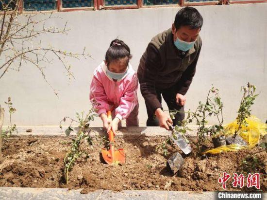 兰州市安宁区教育局家属院业主栽植月季花。