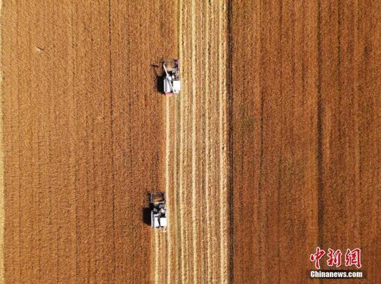 资料图:吉林省镇赉县小冰麦秋收场景。中新社潘晟昱 摄