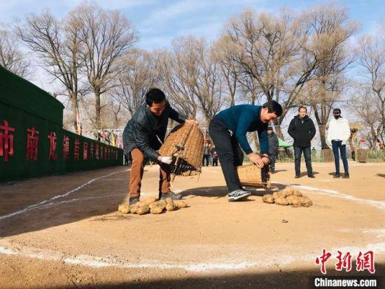 """2019年,游客在甘肃临夏妥家村体验""""装洋芋""""农耕项目。"""