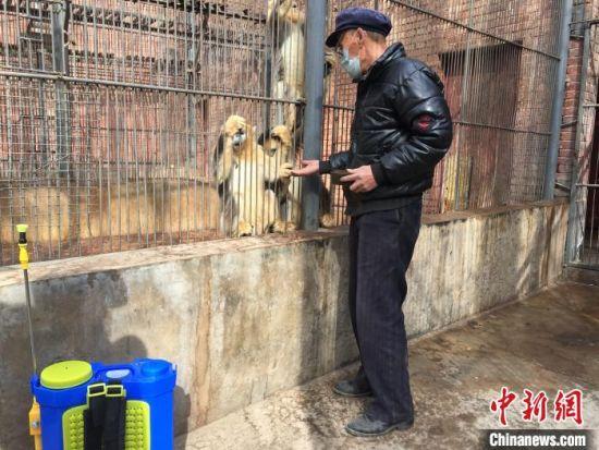 图为甘肃武威神州荒漠野生动物园拍摄的金丝猴。