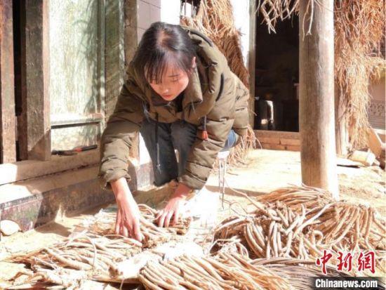 图为甘肃宕昌农家女晾晒自家中药材。