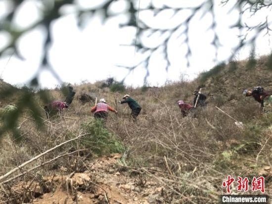 3月下旬,甘肃陇南市文县尖山乡老爷庙村村民,在杂草丛生的陡坡上,开垦荒山植绿。