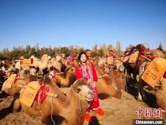 图为台湾大学生来到甘肃敦煌鸣沙山月牙泉景区,体验骑骆驼。 (资料图) 丁思 摄