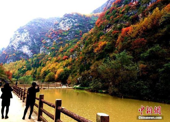 游人驻足赏秋景。