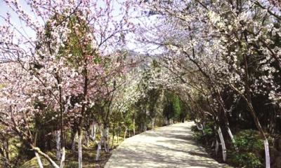 图为兰州北山九州台上森林郁郁葱葱。兰州市南北两山环境绿化工程指挥部供图