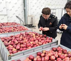 甘肃省陇南市苹果汁出口委内瑞拉