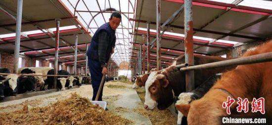 图为4月中旬,广河县一家牛羊养殖农民专业合作社。
