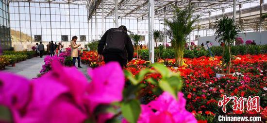 """""""五一""""前夕,兰州市榆中县李家庄田园综合体生态观光园百万株花卉群芳争艳。"""