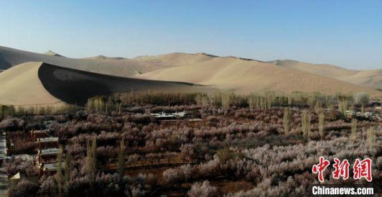 图为鸣沙山下的李广杏花航拍景色。