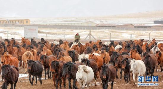 3月31日,山丹马场的牧马人将饮完水的马群赶往草原。新华社发(王超 摄)