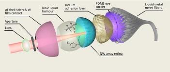 世界上第一个带有3D视网膜的球形仿真眼。
