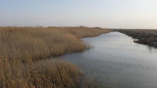 干涸51年之久的青土湖重现水域,水域面积达26.7平方公里,芦苇等植物连片封育面积已达20多万亩。