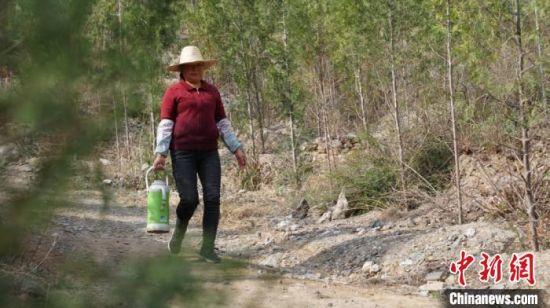 图为文县老爷庙村义务植树村民尚美平的妻子,为村民们送开水。两侧是这三年来所种树木,已满眼绿色。