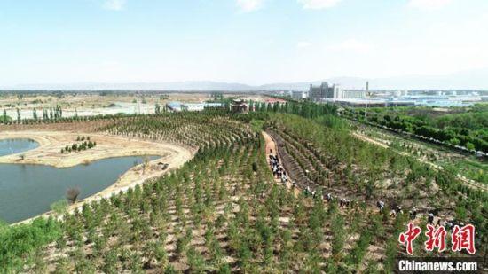 图为5月下旬,甘肃省张掖市甘州区建设中的绿地公园。