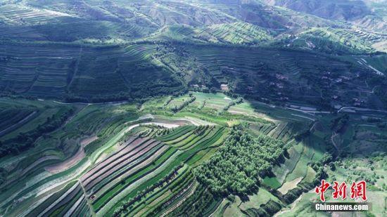 """梯田间的高原夏菜缠绕山间,犹如绿色""""五线谱""""。杨洁 摄"""