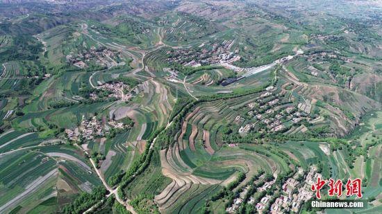 安定区在生态得以改善的同时,还产生经济效益。杨洁 摄