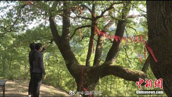 图为青年男女在树下许愿、系红丝带。