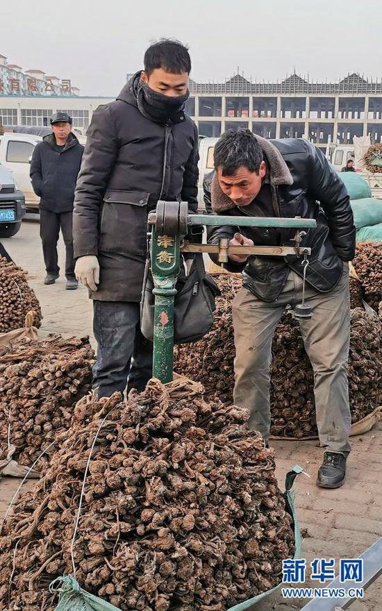 1月15日,药农和客商在甘肃省定西市岷县的中国当归城对当归过秤。新华社记者 郎兵兵 摄