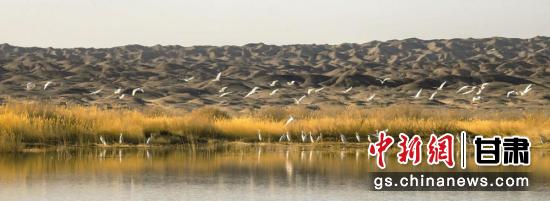 图为唐墩湖省级自然保护区东巴兔管护站水域内迎来大批候鸟。王俊 摄