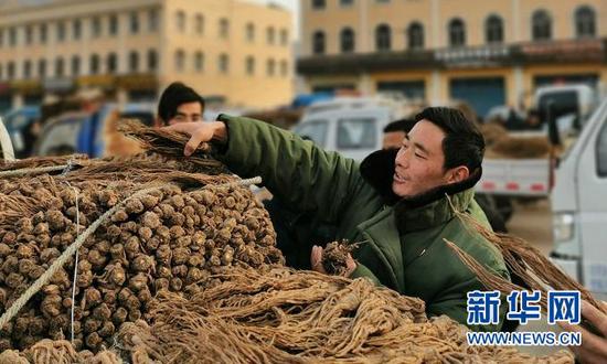 1月15日,药农邱军军在甘肃省定西市岷县的中国当归城打理车上的当归。新华社记者 郎兵兵 摄