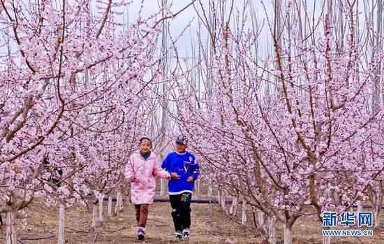 4月3日,小朋友在金满园杏园种植基地里奔跑玩耍。新华网发(王将 摄)