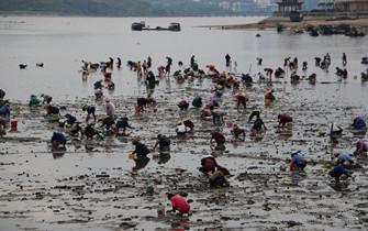 台风过后 防城港市民扎堆挖海螺