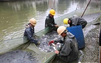 又分鱼!广西医科大3000斤鱼免费吃