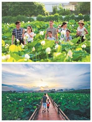 鹿寨县有个美丽花海 乡村旅游有野趣