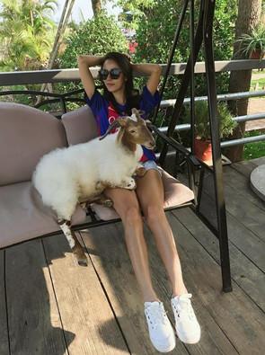 藏绵羊被遗落高速 获广西美女搭救