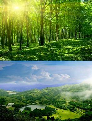 广西最美九大森林!去过就不想回来了