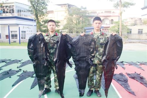 广西查获3批非法野生动物及制品 走私鳄鱼皮铺满操场