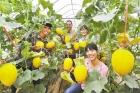 前三季南宁市3个贫困县农民收入增速高于全国平均水平