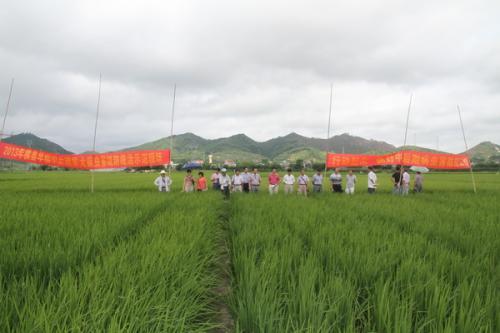 2018农业质量年 横县将打造国家级现代农业产业园