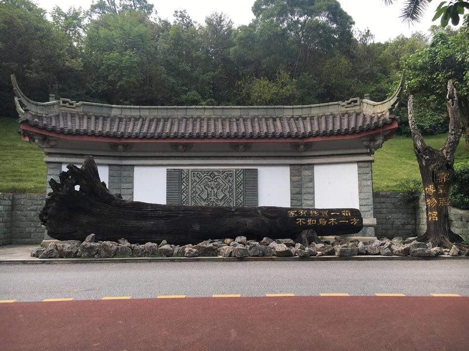 青秀山竟然藏着一个乌木博物馆 这样的茶几你见过吗