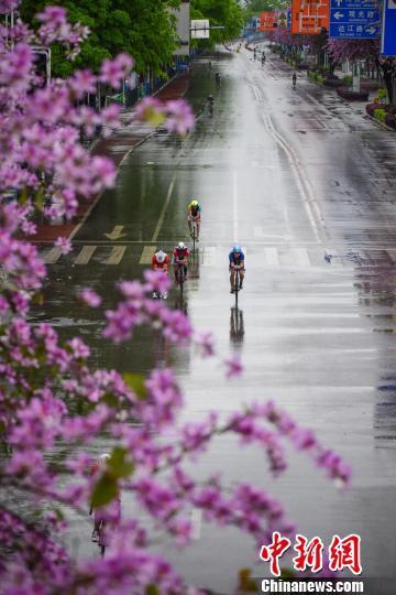 运动员骑着自行车在柳州市落满洋紫荆花的赛道上飞驰而过。 王以照 摄