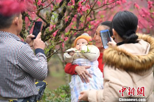 图为民众在桃花树丛中拍照留念。 俞靖 摄