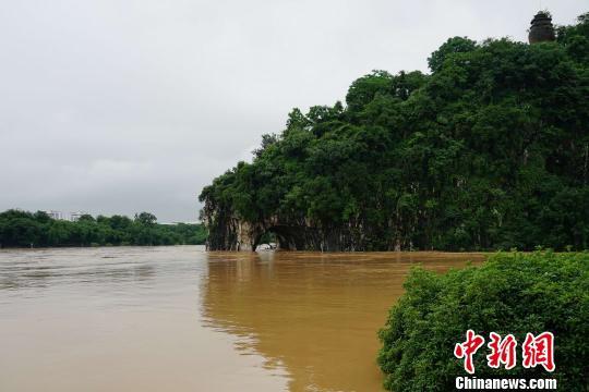 图为洪水中的桂林城徽象鼻山。 唐梦宪 摄