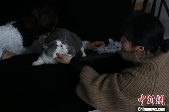 一名宠物摄影师挑逗、安抚猫咪。 林馨 摄