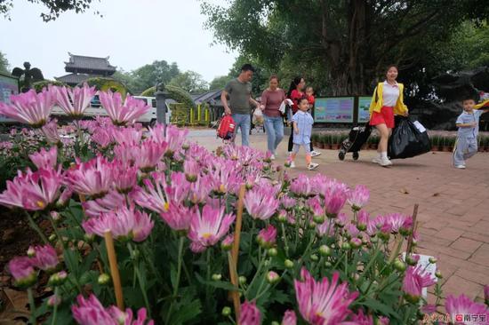 美!南宁这个景区上百种菊花吐蕊盛开 快来打卡吧